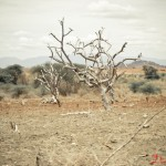 Trees on a dry, perched parcel of land. Vegetation has been severely affected due to the drought that has hit Tharaka North District.