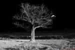 A Tree in The Dark