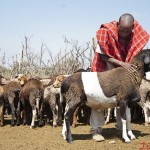 John Molo checks his goats for ticks or wounds in the goat pen at Mai Mahiu. John is a student at the functional literacy class held at Canan Primary School.